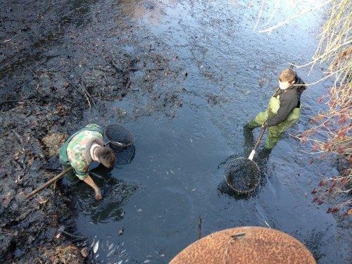 Pomáhali jsme při výlovu rybníka