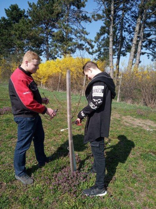 Výuka řezu ovocných stromů
